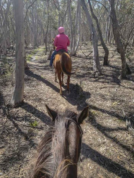 Yarrabin Horse Riding bathurst