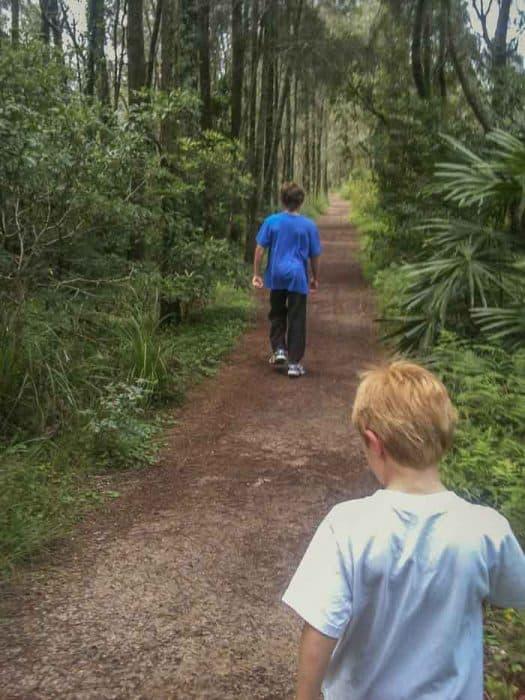 warriewood wetlands walk forest